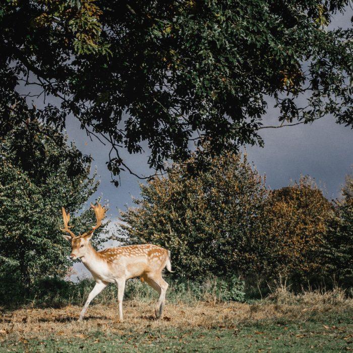 A long weekend road trip – Baddesley Clinton & Charlecote Park